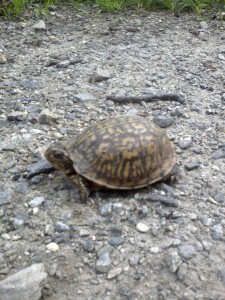 Turtle on the Trail (2)